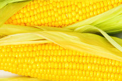 Extreme close up of  corn cobs Stock Image