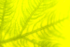 Extreme close-up of fresh green leaf as background. Stock Photos