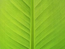 Extreme close-up of fresh green leaf as background Stock Photography