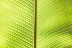 Extreme close-up of fresh green leaf as background Stock Photos