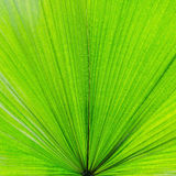 Extreme close-up of fresh green leaf as background Royalty Free Stock Photography