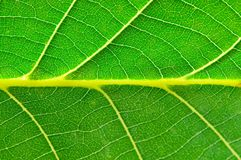 Extreme close up of green leave Royalty Free Stock Images