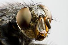 Extreme close up of house fly Stock Photos