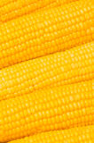 Extreme Close Up Of Yellow Corn