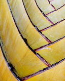 Extreme close-up of palm tree fronds Royalty Free Stock Photo