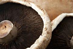 Extreme Close Up of Portobello Mushroom. Extreme Close Up of Three Portobello Mushroom stock photo