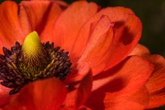 Extreme close up of red flower macrophotography stock photo
