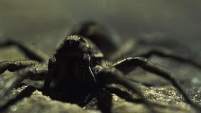 Extreme close up of spider with shifting lighting in background. Extreme close up of small arachnid on flat surface with changing lighting in the background stock video