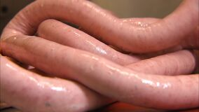 Extreme close up of someone making sausages. Extreme close up of someone making sausage links in a butcher shop stock video