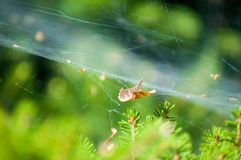 Extreme close-up of spider web stretched over plants stock photos