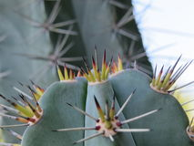 Extreme close up of thorny Stock Photo