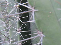 Extreme close up of thorny Stock Image