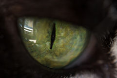 Extreme close up to the beautiful green eye of a cat. And the reflections in it, during a summer day stock image