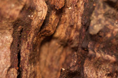 Extreme close up of  tree bark Stock Photography