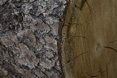 Extreme close-up view of tree bark Stock Photos