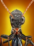 Wasp close up. An extreme close up of a wasp body and head taken with microscope objective Royalty Free Stock Image