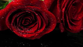 Extreme Close up of Wet Red Roses. stock video