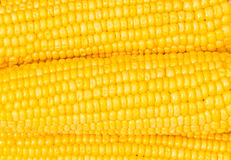 Extreme close up of yellow corn Royalty Free Stock Images