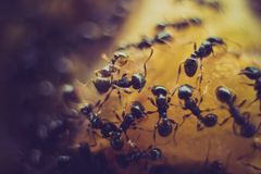 Extreme closeup of an ant colony on a bright orange surface stock photography