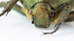 Extreme closeup of beetle stock footage