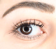 Extreme closeup of a brown female eye Stock Photos