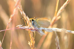 Extreme closeup of butterfly on meadow Stock Photography