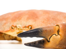 Extreme closeup of a crab claw Stock Photos