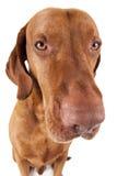 Extreme closeup dog portrait Stock Photos