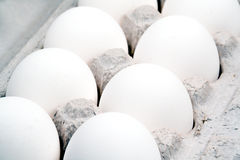 Extreme closeup of a dozen eggs. A very tight closeup shot of white eggs Royalty Free Stock Photo