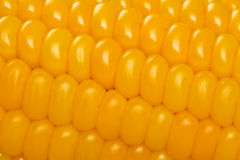 Extreme closeup of freshly harvested corn stock photography