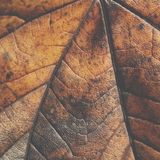 Extreme closeup macro of an colorful autumn leaf with fine detai Stock Images