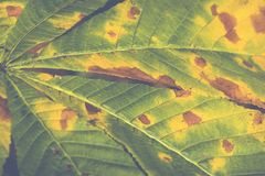 Extreme closeup macro of an colorful autumn leaf with fine detai Stock Photos