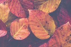 Extreme closeup macro of an colorful autumn leaf with fine detai. L. Nature background Stock Photography