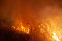 Extreme closeup of raging grass wildfire at night. Inspiration for danger, bushfire warning, posters or memes. Wallpaper or. Extreme closeup of raging grass stock photography