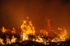 Extreme closeup of raging grass wildfire at night. Inspiration for danger, bushfire warning, posters or memes. Wallpaper or. Extreme closeup of raging grass stock image