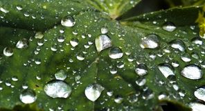 Extreme closeup of rain-drops. On green leaf Royalty Free Stock Photo