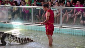 Extreme crocodile show in Pattaya, Thailand Stock Image