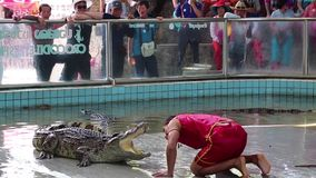 Extreme crocodile show in Pattaya, Thailand stock video footage