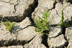 Extreme Dürre durch die globale Erwärmung, die Niederlande Stockbilder