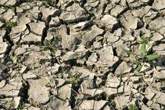 Extreme Dürre wegen des Klimawandels, die Niederlande Lizenzfreie Stockfotos