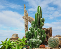 Extreme Depth of Field Photo of Ornamental Cactus Royalty Free Stock Image
