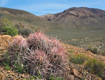 Extreme Depth of Focus Photo of Cactus and Mountains Stock Image