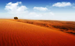 Extreme desert. Landscape with single tree royalty free stock image