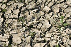 Extreme drought due to climate change, Netherlands Royalty Free Stock Photos