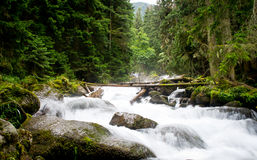 Extreme Falls in forest, the mountain river Stock Photo