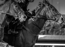 Extreme Focus at High Speeds black and white Stock Photos