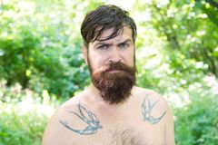 Extreme heat. Man thirsty sweaty hipster naked in forest. Heat concept. Summer heat. Bearded tattooed guy relax in. Nature hot summer day. Hipster wet skin and royalty free stock photos