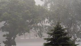 Extreme Hurrikan-Winde Lash Trees In Ukraine stock footage