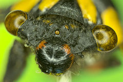 Extreme insect closeup. Stock Photography