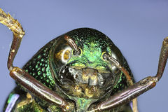 Extreme insect closeup Royalty Free Stock Images